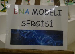 DNA SARMALI SERGİSİ